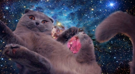 Space Cat Cats Animals Background Wallpapers On Desktop