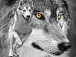 yellow eyed wolves