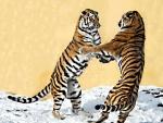 2 Siberian tigers