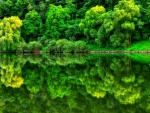 Green mirror of nature