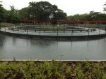 Rain on campus