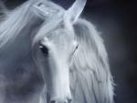 •Stallion•