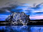 Blue Jaguar Lampart