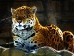 jaguar fractal