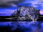 Purple jaguar lampart