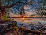 Splendor of Nature