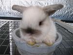 bunny in a bucket