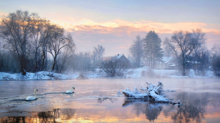Winter Lake of Swans at Sunrise - image, foggy, sunset, fog, lights, lightness, Pink, gold, multicolor, splendor, countries, bright, beauty, picture house, sunrise, Black, Gray, brightness, houses, golden, birds, country, trees, winter, panorama, cool, snow, multicolored, ice, awesome, sunshine, photoshop, landscape, colorful, scenic, sunny, White, beautiful, seasons, trunks, cold, photography, mirror, scenery, blue, animals, Picture, photo, amazing, reflex, view, colors, mist, swans, lake, Nice, icy, nature, misty, branches, frozen, reflections, natural, scene