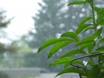 Green Plant Forground with Rain Backdrop