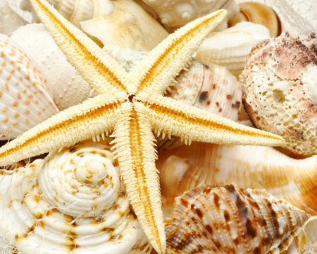Shells and starfish - nature, shells, starfish, others