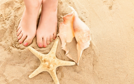 Shells and starfish - shells, sands, starfish, feet
