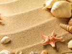Shells and starfish