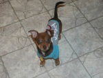 Oliver James Our Chiweenie