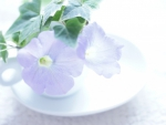 Cup of Petunias