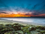 beautiful sunset over a moss covered beach