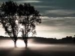 misty evening on a meadow