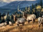 Wapiti Elk F2