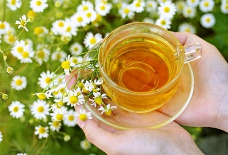 chamomile tea - still life, flowers, chamomile, tea, teacup