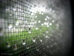 Dew Soaked Screen