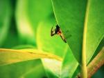 Spider catch bug