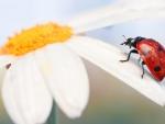 * Ladybug *