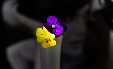 Violette - violette, photo, girl, background, macro, flowers, colors