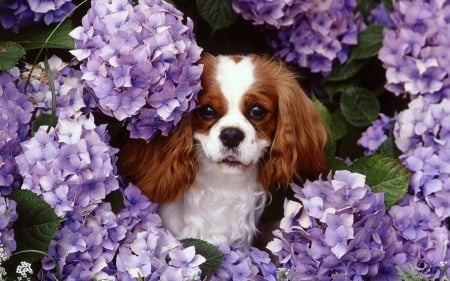 Cute Dogs - flower, cute dogs, animals, dogs