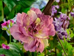 Scenic Floral Spring