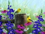 ★Goldfinch Meadow★