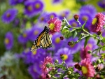 Buttefly on pink flower