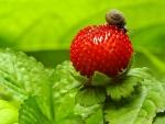 Naughty snail