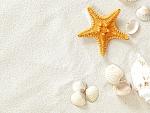 Seashells and Starfish on the Sand