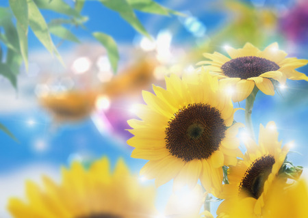 sunflower - romantic, flowers, nature, sunflower, sunshine