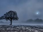 tree in a foggy winter field