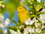 Bird in spring flowers