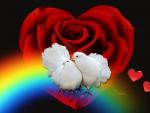Doves In Love♥