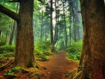 mystical path through a beautiful forest hdr