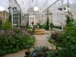 Flowers in a victorian conservatory