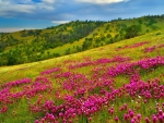 Pink slope