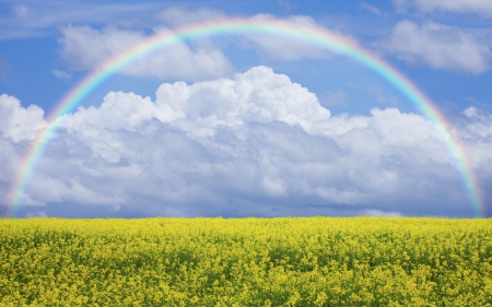 * Rainbow * - rainbow, field, nature, sky