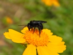 Black Bee and Flower