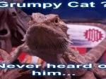 Grumpy Cat Who???