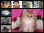 ♥ cute kittens for my friend carmenmbonilla ♥