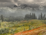awesome foggy landscape hdr