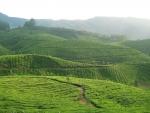 Munnarkerala - India