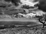 black and white scape