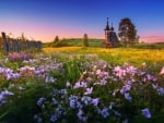 Summer in countryside