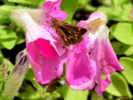 Butterfly Away