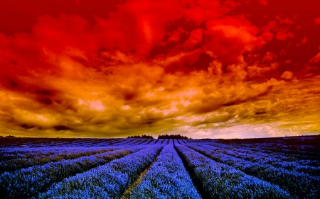 SUMMER FIELD - summer, lavender, clouds, sky, field