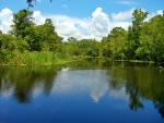 Donner Swamp
